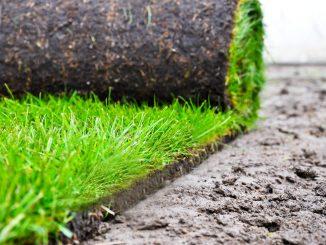 Trawnik z rolki – sposób na piękny ogród czy zbędny wydatek?