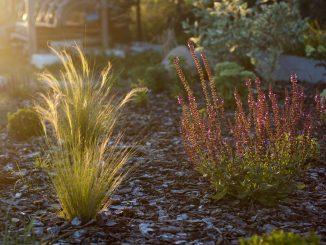 Projektujesz swój ogród? 3 rozwiązania, które powinieneś znać!